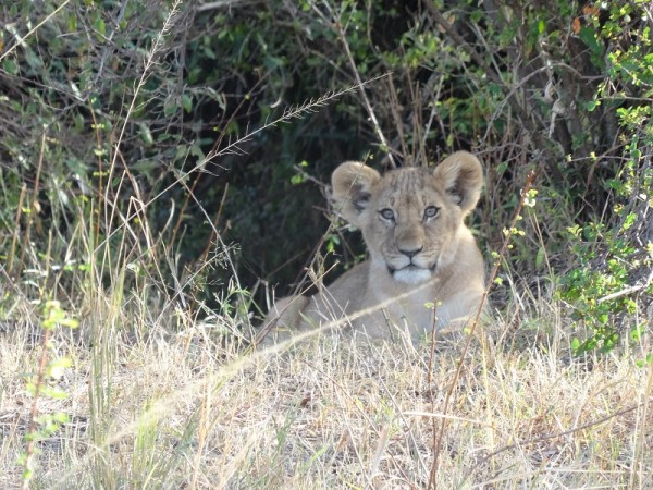 Captivating Experiences Around the World 2015 – Masai Mara, KENYA