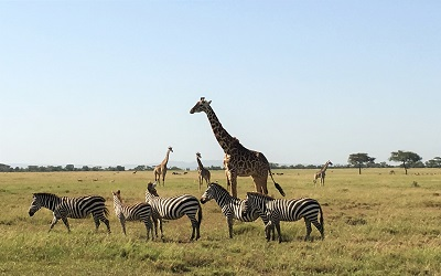 African Adventure by Luxury Private Jet February 2016 – SERENGETI