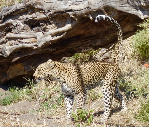 Africa & The Indian Ocean 2017 by Private Jet – Chobe, Botswana June / July