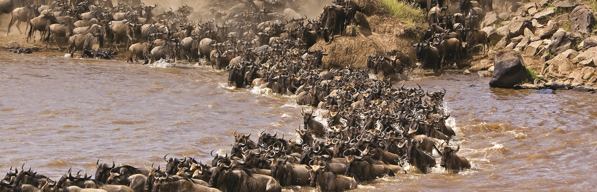 The-Wildebeest-Migration-Fun-Facts-about-the-Migration