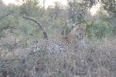 Africa & The Indian Ocean Luxury Tour by Private Jet 2018 – Sabi Sand Private Game Reserve, South Africa