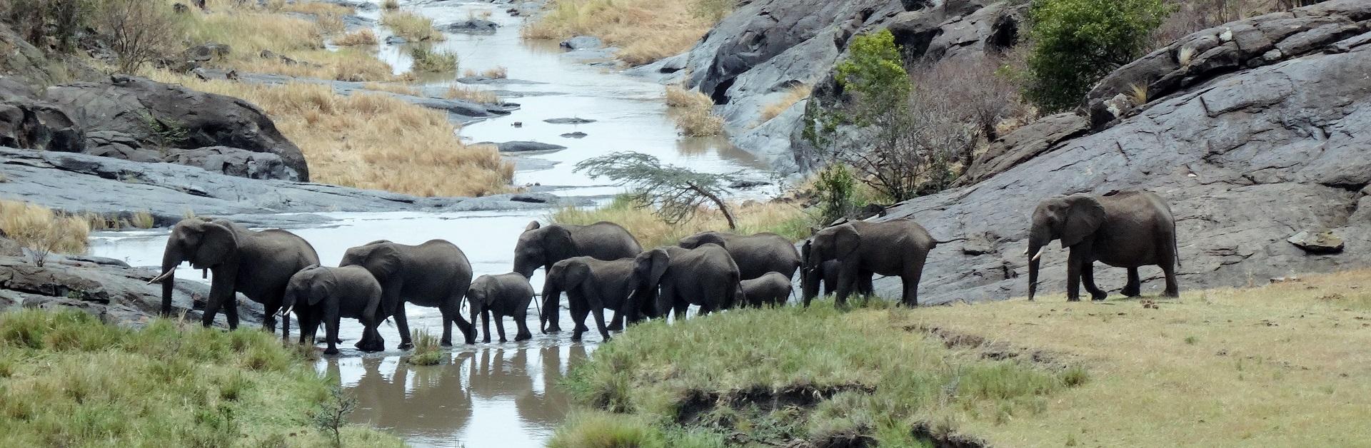 Kenya elephantsATW15