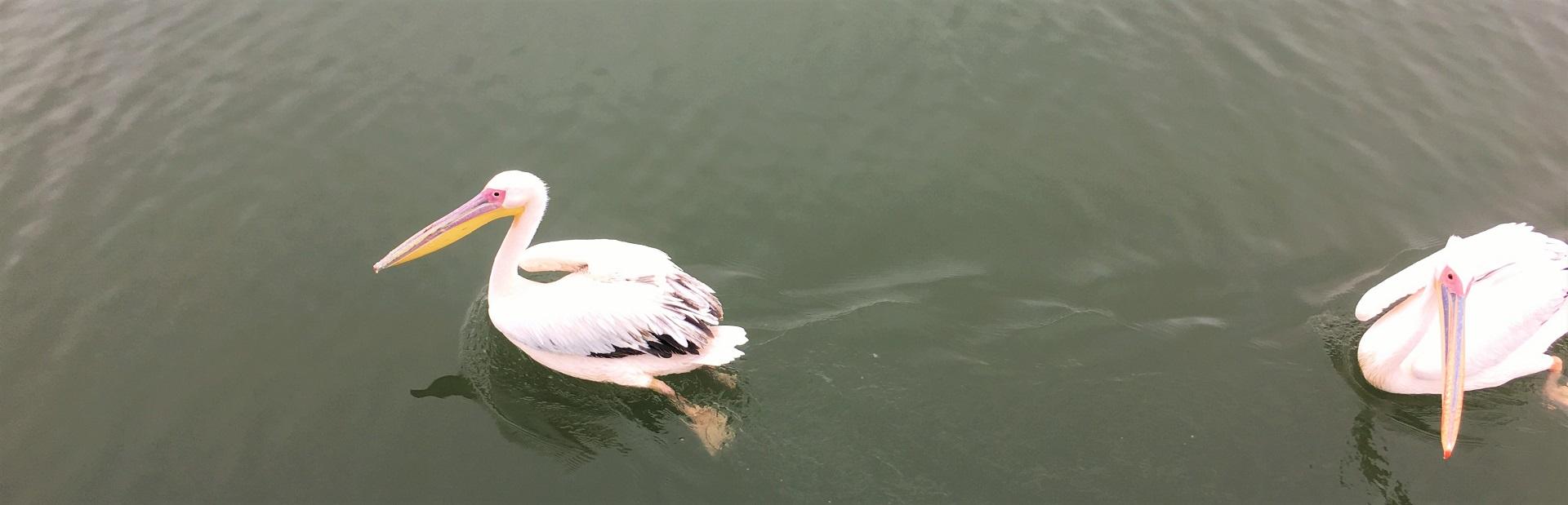Walvis Bay IMG_6543 (2)