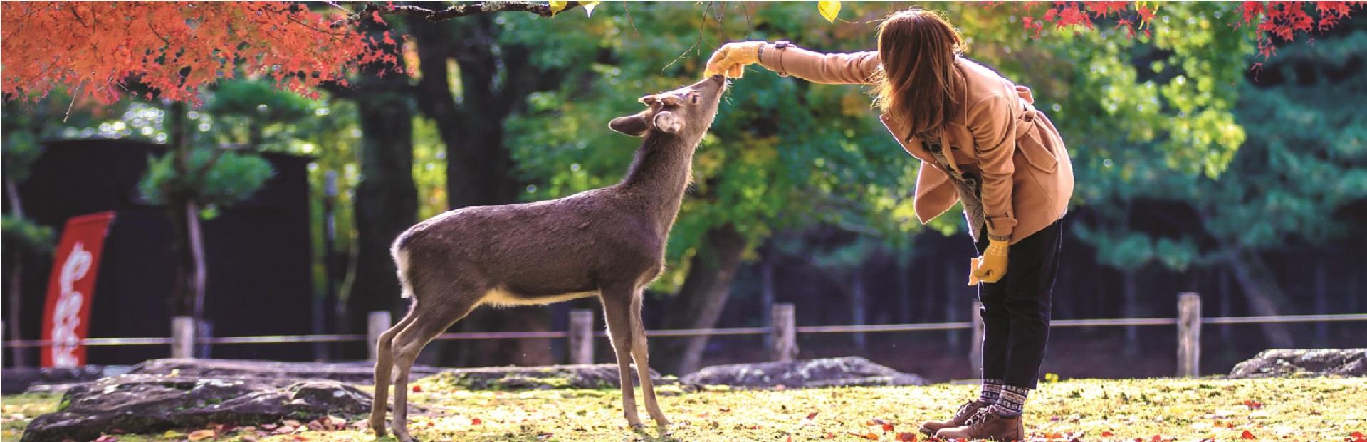 girl with deer Nara Park – 37298563_ml