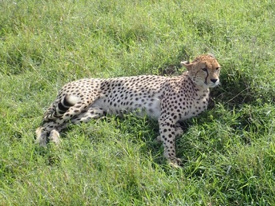 African Explorations by Private Jet 2019 –  Serengeti, Tanzania