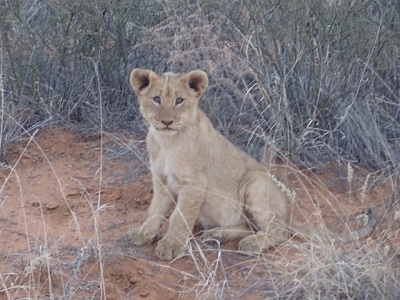 African Explorations by Private Jet 2019 –   Tswalu Private Reserve, Kalahari Desert, South Africa